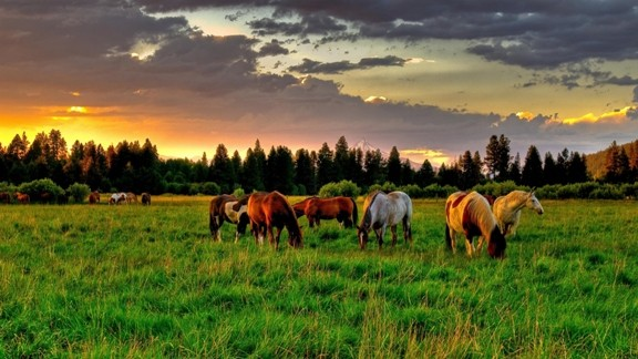 Otlayan Atlar