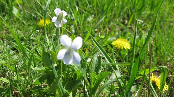 Bahar Zamanı
