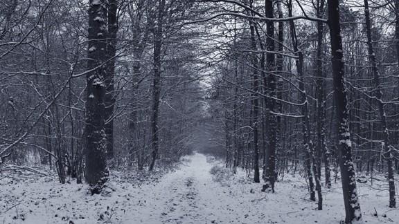 Karlı Eski Orman Yolu
