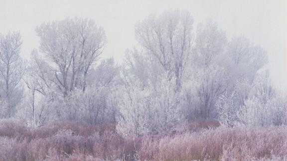 Karlı Orman Manzarası