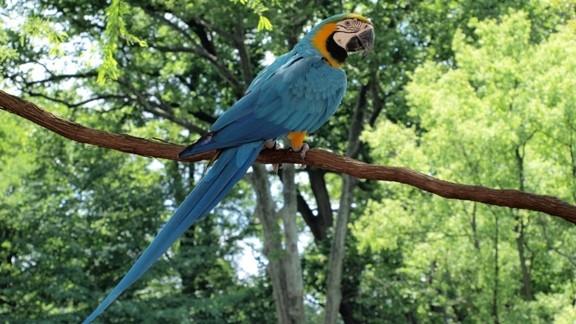 Ağaç Dalında Papağan