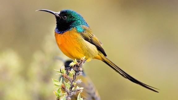 Renkli Kuş Masaüstü Resmi