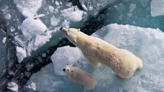 Kutup Ayısı ve Parçalanmış Buzul