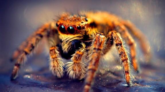 Makro Örümcek Masaüstü Resmi