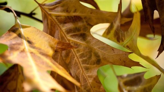 Kahverengi Yapraklar Makro Çekim