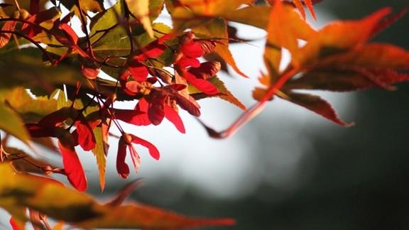 Sonbahar Gelişi