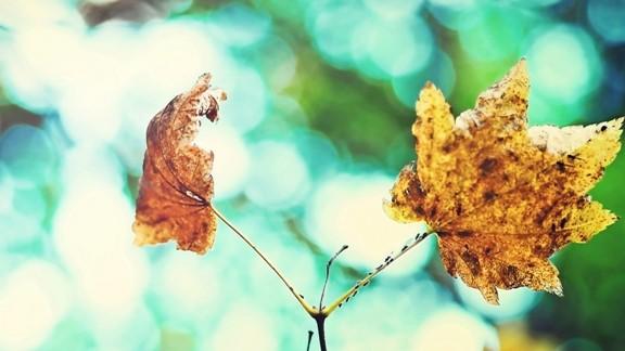 Yapışık Yapraklar