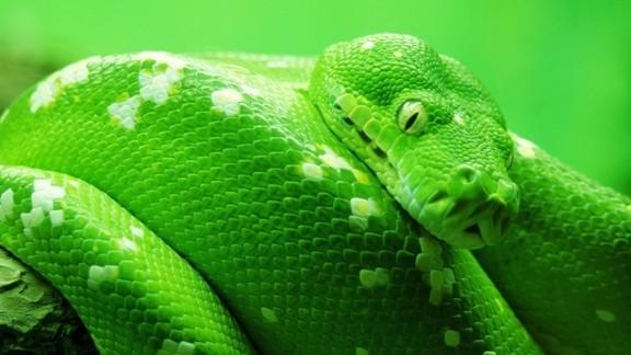 Yeşil Yılan Masaüstü Resmi