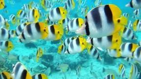 tropikal balık,deniz,renkli