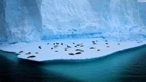 fok balığı,deniz,buz,fokgiller
