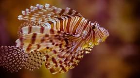 renkli,balık