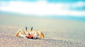 yengeç,kumsal,makro,güneş,deniz