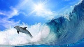 yunus,deniz,dalga,güneş,gökyüzü