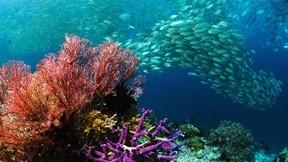 balık,deniz,tropikal,mercan