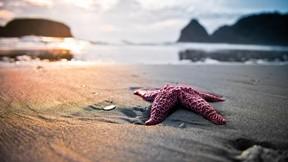 deniz yıldızı,kumsal,deniz,sahil