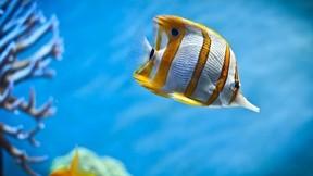 tropikal,balık,deniz