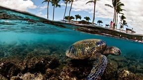 karetta karetta,deniz,gökyüzü,palmiye