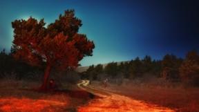 manzara,doğa,günbatımı,ağaç