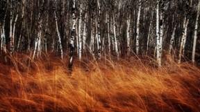 orman,ağaç,ot,doğa