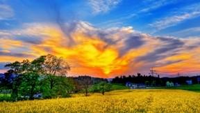 çiçek,hdr,gökyüzü,manzara,ağaç