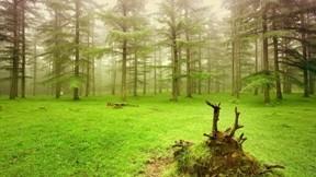 orman,hdr,sis,doğa,ağaç,çimen