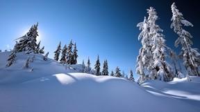 kış,manzara,kar,ağaç,güneş,gökyüzü