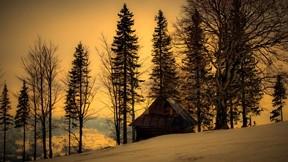 günbatımı,kar,ormanevi,ağaç,kış
