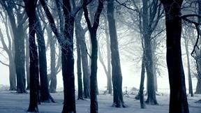 kar,orman,kış,ağaç,sis