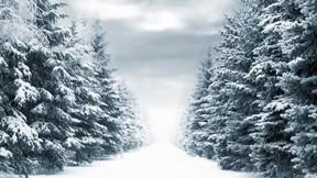 köknar ağacı,kış,kar,orman,yol