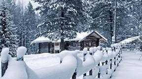 doğa,kar,ormanevi,ağaç,kış