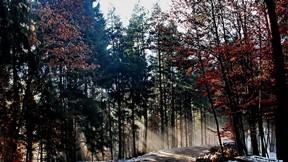 orman,yol,güneş,kar,ağaç