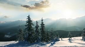 kış,orman,güneş,gökyüzü,ağaç