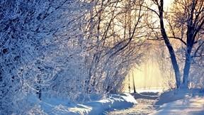 kar,yol,ağaç,kış