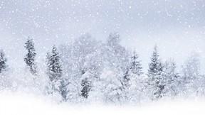 kar,ağaç
