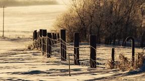 orman,kar,telçit,ağaç,kış,güneş