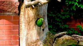 papağan,ağaç,duvar,yaprak,güneş