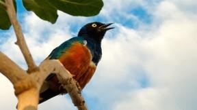 renkli,kuş,ağaç,yaprak
