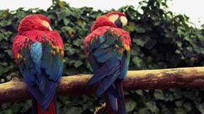 kuş,papağan,dal,ağaç