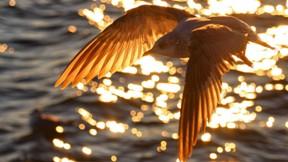 martı,kuş,deniz,güneş