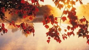 yaprak,günbatımı,güneş,ağaç