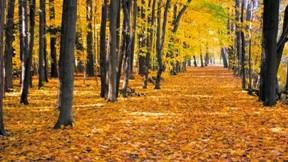 orman,ağaç,doğa,sonbahar,yaprak