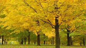 ağaç,doğa,yaprak,sonbahar