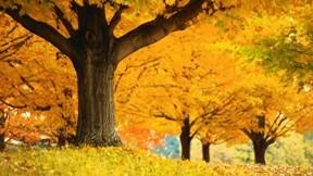 sonbahar,ağaç,çimen,yaprak,doğa