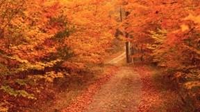 sonbahar,yol,ağaç,doğa,yaprak