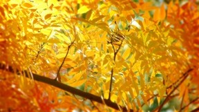 sonbahar,yaprak,güneş,dal