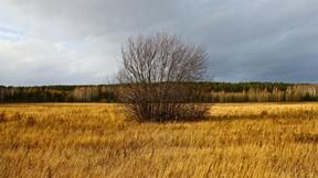 sonbahar,çalılık,roman,gökyüzü
