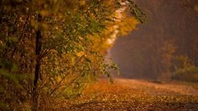 orman,sonbahar,yol,yaprak,ağaç