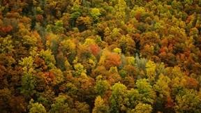 orman,sonbahar,ağaç