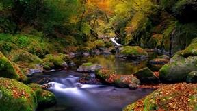 sonbahar,akarsu,orman,yaprak,ağaç