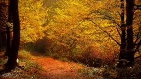 sonbahar,ağaç,yaprak,yol,orman